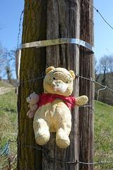 Winnie the Pooh @ Hike to Montagne de la Mandallaz & Lac de La Balme de Sillingy (*_*) Tags: europe france hautesavoie 74 spring printemps 2019 march annecy labalmedesillingy epagny hiking mountain montagne nature randonnée walk marche jura mandallaz sacrifice winnie teddybear randonnee