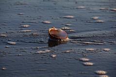 Seashell (RS_1978) Tags: pentaxk7 spanien gewässer acqua eau espagne españa spain wasser water torremolinos andalucia esp