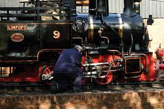 BWLR 75751 (kgvuk) Tags: bwlr bredgarandwormshilllightrailway kent railway narrowgauge train steamtrain locomotive steamlocomotive steamengine 060t limpopo