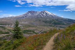 Mount St Helens WA (swissuki) Tags: mountsthelens wa mountain volcano national park usa
