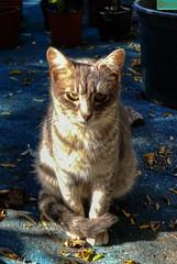 Gatito. (Pontius Pilatuss) Tags: nature naturaleza gatos gato cat animals animal jardin garden gardens pelo ojos eyes lindo nice bonito beautifil andalucia andalusie