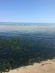 Seaweed gathering (hannaschmitz) Tags: capecod ma massachusetts sandwichma beach shore water sand sky nature