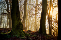 Early morning forest (Rita Eberle-Wessner) Tags: moss moos wald forest woods herbst autumn fall laub leaves blätter baum bäume tree trees laubblätter nebel fog atmosphere atmosphäre stimmung stimmungsvoll mystisch mystic magic