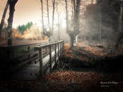 amanecer en otxandio (azucena G. De Salazar) Tags: bizkaia basoa euskalherria euskadi basquecountry vizcaya forest otxandio