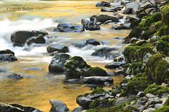 Reflecting Waters (Virginia Bailey Photography) Tags: limekiln washington stillaguamishriver granitefalls wa canon pnw pacificnorthwest america nature river rocks moss reflections