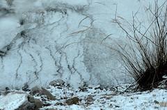 Le torrent gelé (RarOiseau) Tags: froid givre hiver alpesdehauteprovence curbans torrent glace