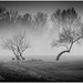 Misty Forest 6