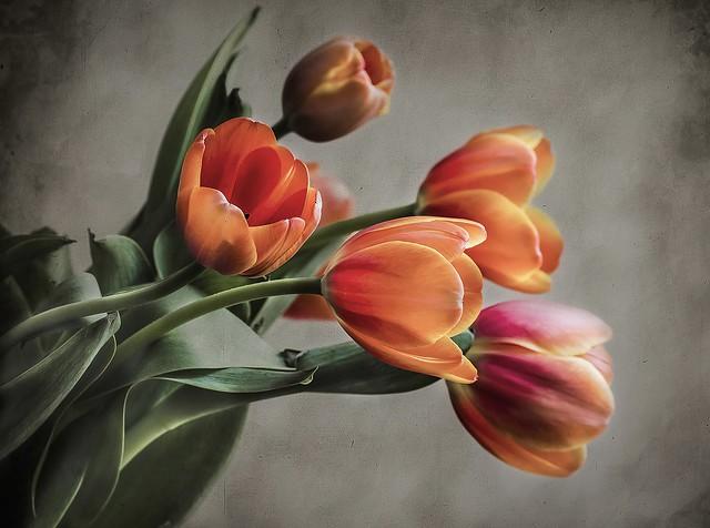 Обои фон, букет, тюльпаны картинки на рабочий стол, раздел цветы - скачать
