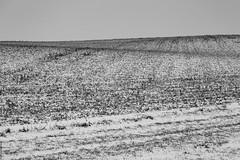 """stilte"" II (B.Graulus) Tags: photography landscape fotografie landschap huldenberg vlaanderen flanders belgië belgium monochrome fields snow sneeuw winter velden serene minimal canon blackandwhite"