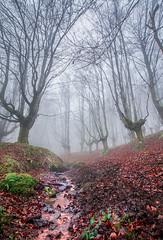 urkiola erreka 1 (juan luis olaeta) Tags: paisajes landscape forest bosque basoa fog nieblas laiñoa hayedo pagoa nature photoshop urkiola