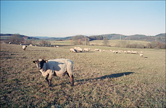 de Gumpelz (fluffisch) Tags: fluffisch steinbergdeckenhardt saarland leicam6 rangefinder messucher summiluxm35f14 preasph summilux 35mm analog film kodak portra160