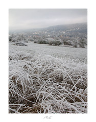 Frosty Valley (Max Angelsburger) Tags: winter landscape hoarfrost winterlandschaft winterwunderland grass bushes town valley raureif reif icy eis weis kaltcold white stille thoughtfulness silence dezember december 2018 niefern öschelbronn niefernöschelbronn enzkreis canon niefernburg talburg igbestshotznatgeoyourshotnatgeotravelpicepiccapturesawesomeglobesplendidearthearthportraitsnatureperfectionbeautyofnatureplaceswow