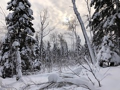 Winter landscape in the Superior National Forest, Cascade River State Park along the North Shore of Lake Superior, Minnesota (thstrand) Tags: tourism destinations touristdestination outside outdoors superiorhikingtrail public governmentlands usfs usforestservice stateparks statepark cookcounty arrowheadregion lakesuperior northshore frozen january december cold unitedstates trees snowy snow landscapes woodland northamerica usa us american mn northwoods forests wilderness landscape winter minnesota superiornationalforest cascaderiverstatepark