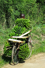 Bananen auf Fahrrad (bhermann.hamburg) Tags: uganda fahrrad bike bananen bananas green gruen
