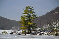 Harriman State Park Tree_0639 (smack53) Tags: smack53 winter wintertime winterseason winterscenery wintry tree snow snowscape harrimanstatepark nikon d3100 nikond3100 newyork rocklandcounty
