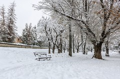 In the light of winter (Daniel Boca) Tags: winter winterscene snow landscape nature naturephotography naturepics naturephotograph canon canoneos750d canoneurope canonromania tree trees snowyday clouds outdoor outside park