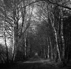 Winter path (Rosenthal Photography) Tags: ff120 asa400 analog epsonv800 landschaft mittelformat mediumformat 20190301 rodinal12521°c105min 6x6 ilfordrapidfixer anderlingen städte zeissikonnettar51816 rolleiretro400s dörfer siedlungen winterpath winter path pathway way track trail mood landscape trees forest zeiss ikon nettar novar anastigmat 75mm f45 rollei retro retro400s rodinal 125 epson v800