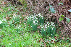Early Blooms (Dougie Edmond) Tags: nature wildlife early spring troon scotland unitedkingdom gb