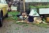 (Chris Hester) Tags: 47 4p northern ireland farmhouse dew dog yellow car