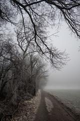 Mystic trees (KK824) Tags: lobau wien vienna frost kalt mystisch gruselig horror