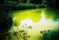 Pond (Stephen Dowling) Tags: 35mm film somerset lomography lomolca russiancamera sovietcamera kodakelitechrome100 xpro crossprocessed