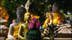 _SG_2018_11_0791_IMG_5479 (_SG_) Tags: bangkok suvarnabhumi holiday citytrip four cities asia asia2018 2018 capital thailand city ayutthaya temple phra nakhon si historical park wat sanphet
