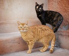 Miau miau (Fabi's Photography) Tags:
