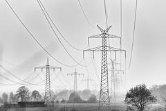Masts and lines in nature (CPbild) Tags: duotones d750 nikon nature nikkor70200mmf28 schwarzweiss outdoor cpbild natur blackwhite bäume trees monochrome schwarzweis blackandwhite bw