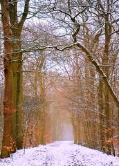 Every Step will Show (barbara_donders) Tags: natuur nature winter snow sneeuw landschap landscape path pad bos forest trees bomen white wit oranje orange follow volgen mooi beautiful magisch magical prachtig foggy mistig