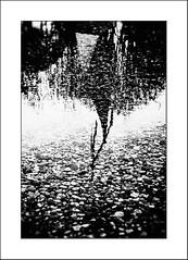 Au pays des Ombres / In the Land of Shadows #5 (Napafloma-Photographe) Tags: 2016 architecturebatimentsmonuments artetculture bandw bw bâtiments châteaulacoste cuisinealimentationnourriture fr france géographie métiersetpersonnages natureetpaysages objetselémentsettextures personnes techniquephoto végétaux artcontemporaininstallations blackandwhite eau galets monochrome napaflomaphotographe noiretblanc noiretblancfrance ombre photographe reflet vitre lepuysainteréparade bouchesdurhône