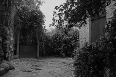 Bussana Vecchia (Giuseppe Cavallaro Fotografo) Tags: bussana borgo italia albero villaggio medioevo
