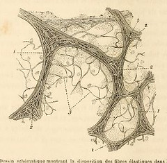 This image is taken from Page 20 of Maladies de l'appareil respiratoire; tuberculose et auscultation (Medical Heritage Library, Inc.) Tags: auscultation respiratory tract diseases tuberculosis medicalheritagelibrary cushingwhitneymedicallibrary americana date1890 idmaladiesdelappar00gran