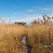 Reed Path