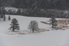 quabbinreservoir2019-82 (gtxjimmy) Tags: nikond7500 nikon d7500 winter snow quabbinreservoir swiftriver ware belchertown massachusetts watersupply newengland quabbin