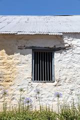 4Y4A3934 (francois f swanepoel) Tags: agapanthus blue capetown corrugatediron glyniswalbrugh holslootriver shed skuur stettynskloof rawsonville westerncape