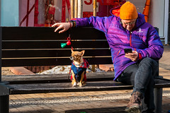 Dog thinker (Sebastian Pier Filip) Tags: lumix panasonic tz200 zs200 colors street sofia bulgaria dog animal