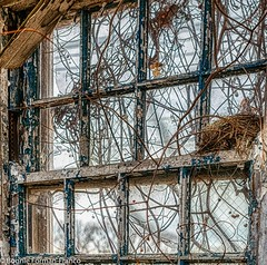 ABANDONED WINDOW WITH BIRD NEST_2019-03-13   -_D85_5323- (Bonnie Forman-Franco) Tags: abandoned abandonedphotography abandonedphoto abandonedbuilding abandonedbuildings decayed rottedwood rottedroof photoladybon hdr hdrphotography aurorahdr2019 windows doors birdnest nikon nikonphotography nikond850 nikon2470 nikcollection weeds boardedbuildings