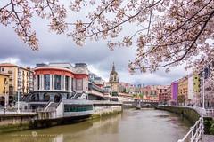 La primavera está aquí. (Juan Ig. Llana) Tags: bilbao bizkaia vizcaya españa es ciudad primavera flor ramas árbol cerezo río ría agua mercado iglesia sanantón muelle marzana