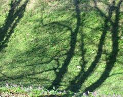 Sjene - The shadows (Hirike) Tags: zagreb hrvatska croatia stabla trees sjene shadows