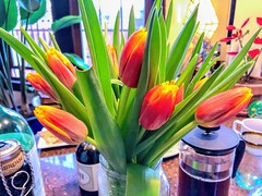 Birthday party 🎂 ?? ―We don't do anything so quotidian in *this* household 🏡 ♥️ 😉 (anokarina) Tags: appleiphone8 parkview instagram nofilter tulips flowers bouquet plants houseplants window city urban spring birthday party coffee frenchpress