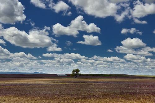 Farmlands Under Skies of Blue and Clouds of White