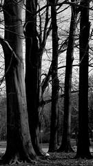 Drzewa B&W (andrzejskałuba) Tags: poland polska pieszyce dolnyśląsk silesia sudety europe panasonicdmcfz200 lumix roślina plant monochrome bw black white blackwhite drzewa trees flora floral natura nature natural natureshot natureworld beautiful niebo sky trawa grass view widok forest las 100v10f 000v40f