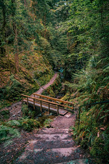 Upper Pucks Glen (Octal Photo) Tags: 500px footpath park woods lush foliage path forest trees outdoors autumn water river riverbank grass travel beautiful beauty falling footbridge nature upper pucks glen dunoon scotland unitedkingdom