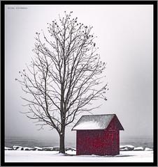 Winter (2) (hoedh) Tags: pentax 645z snow winter house tree 55mm