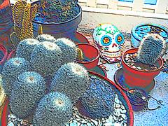Cactus Garden with Skull (Faux Colored Chalk) (EmperorNorton47) Tags: portolahills california photo digital winter deck cactus cacti dayofthedead skull fauxcoloredchalk containergarden containergardening pottedplant pottedplants