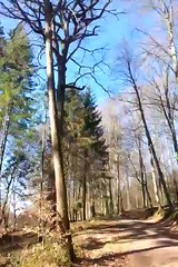 spring is coming (undefinable moods) Tags: woods spring forestlover forestscape blackforest walking hiking naturelover nature naturaleza trees birds way path