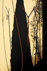 2019-03-05 17.28 (peter uitz) Tags: abstrait light lumière plantes jardin garden afternoon solieil