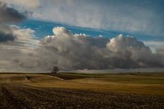 Nostalgia No. 3 Early spring (Marcin eM.) Tags: nostalgia sonyalpha7 sonya7 sonyα7 ilce7 hexanon50mmf17 landscape spring tree sky clouds wiosna pejzaż drzewo chmury podlasie poland polska