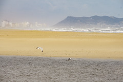 Seagulls (dcdc887) Tags: españa paisaje landscape nature naturaleza horizon horizonte sky cielo mar sea water agua pájaros bird animales animals