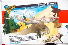 Did You Know? (Thomas Hawk) Tags: america saltlakecity saskatchewan usa uhaul unitedstatesofamerica unitedstates utah moose fav10